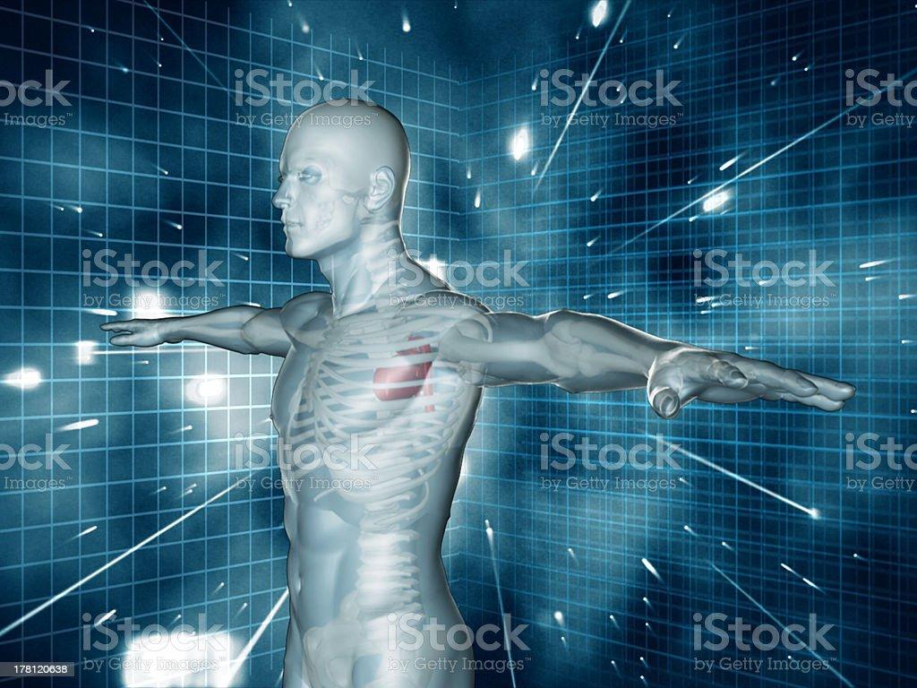 Medical human representation standing stock photo