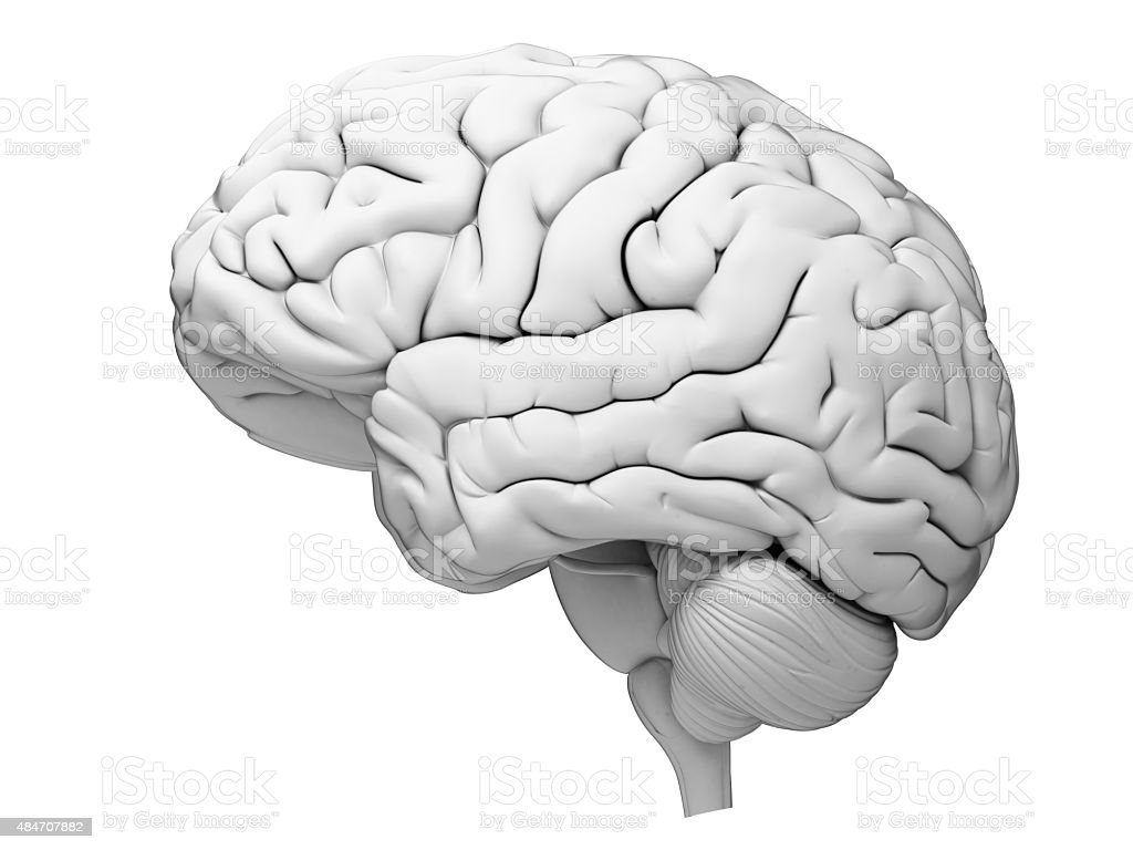 medical illustrate medically accurate illustration of the human brain 2015 Stock Photo