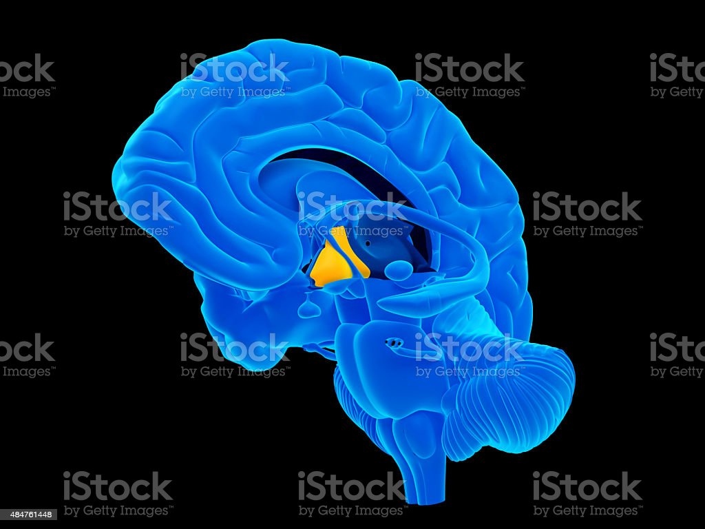 medical illustrate stock photo