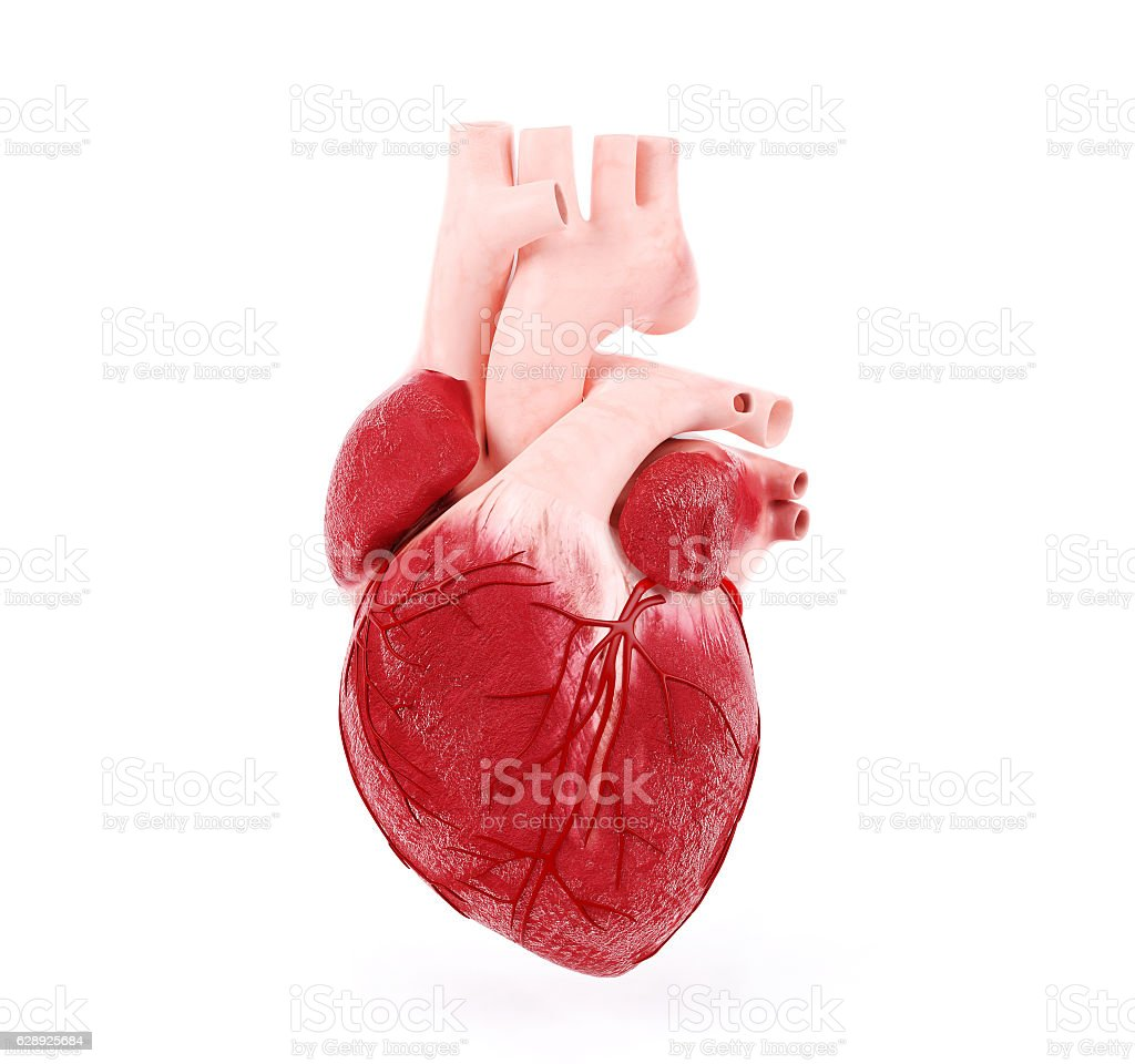 Medical illustration of a human heart stock photo