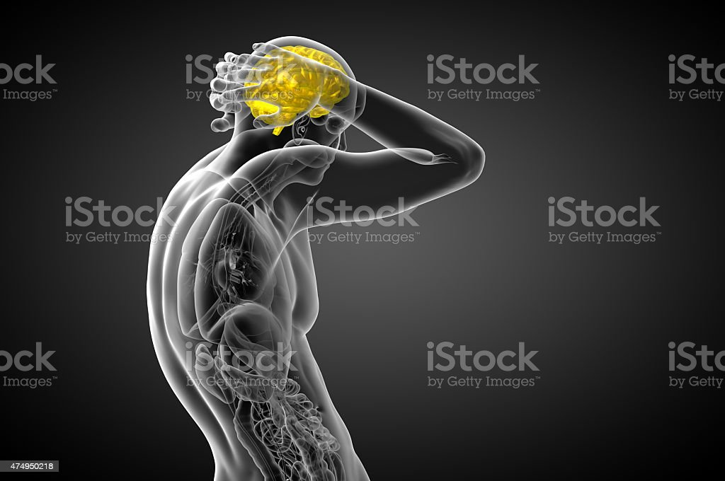 3D medical illustration of the brain stock photo