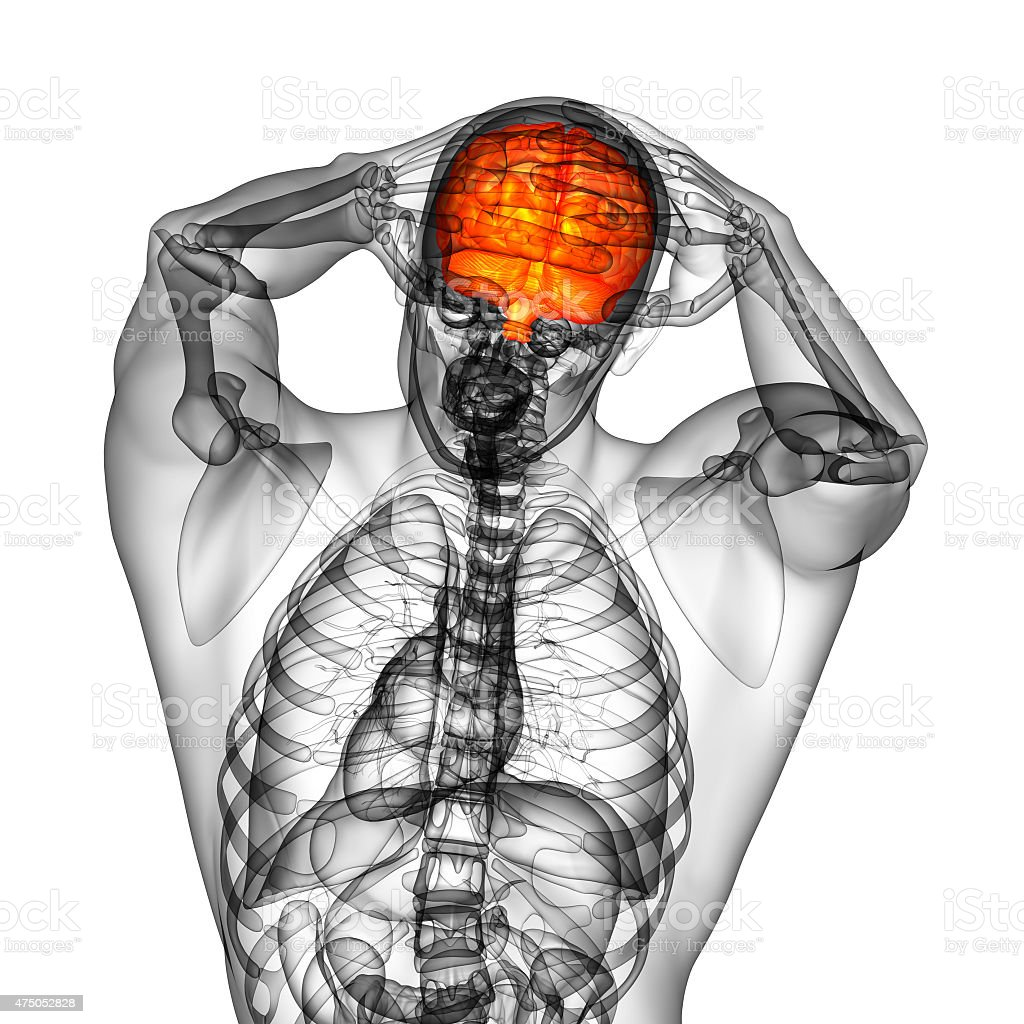 3 D Medizinische Illustration Des Gehirns - Stockfoto | iStock