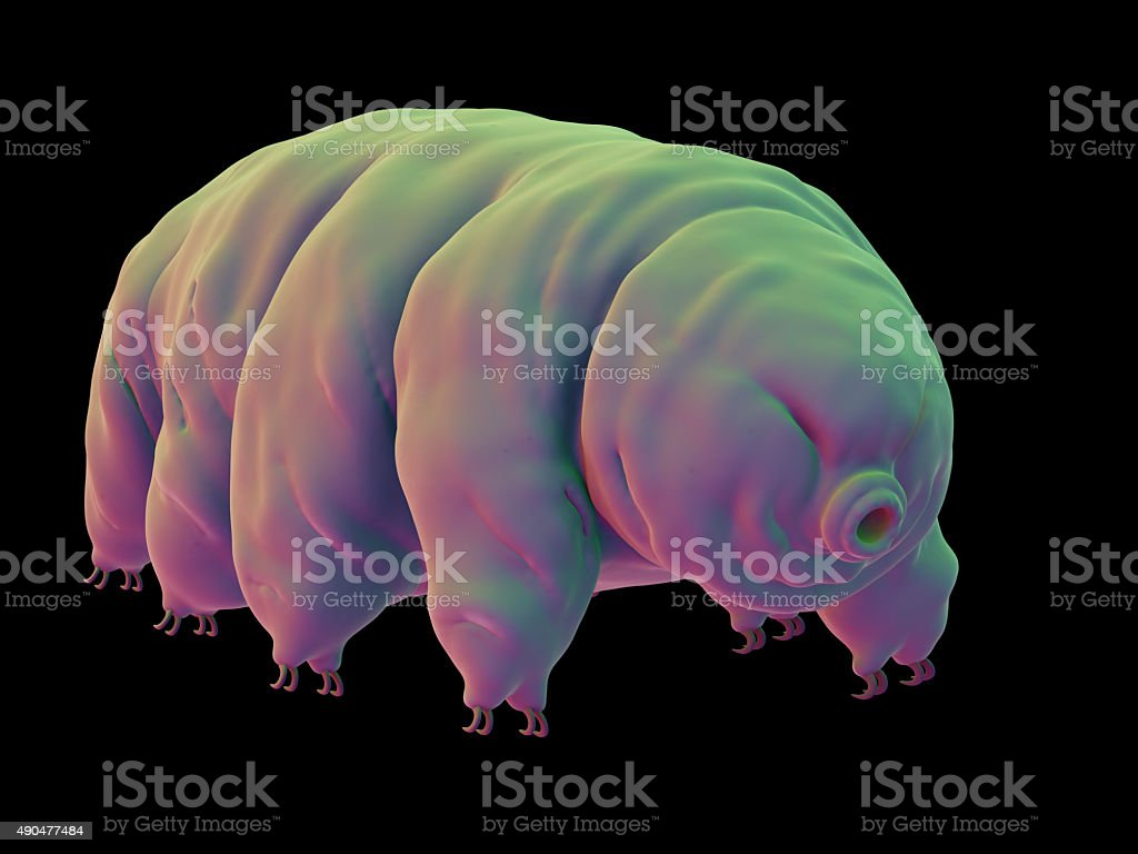 medical illustration medically accurate illustration of a water bear 2015 Stock Photo