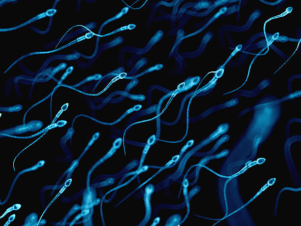 medical illustration medically accurate illustration of human sperms sperm stock pictures, royalty-free photos & images