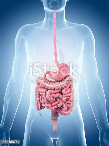 istock medical illustration 490480750