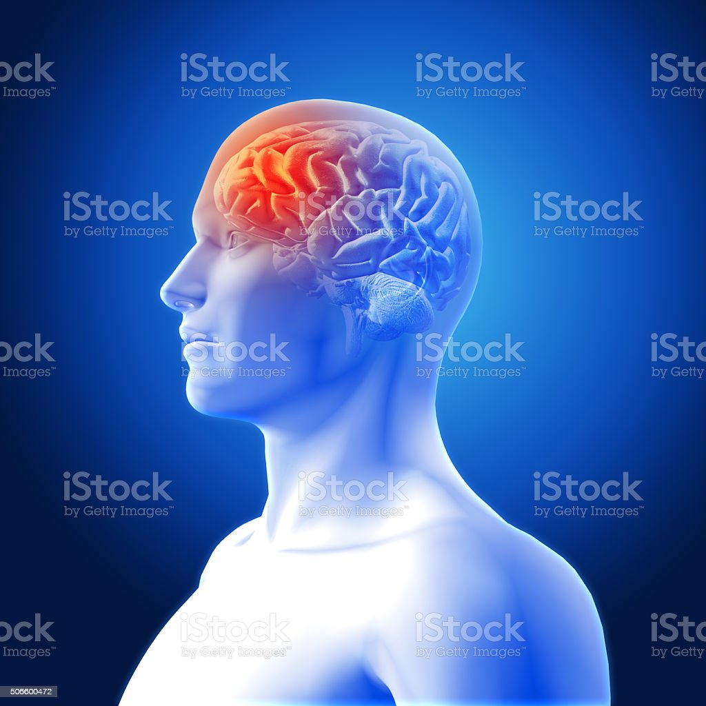 3D medical image showing brain stock photo