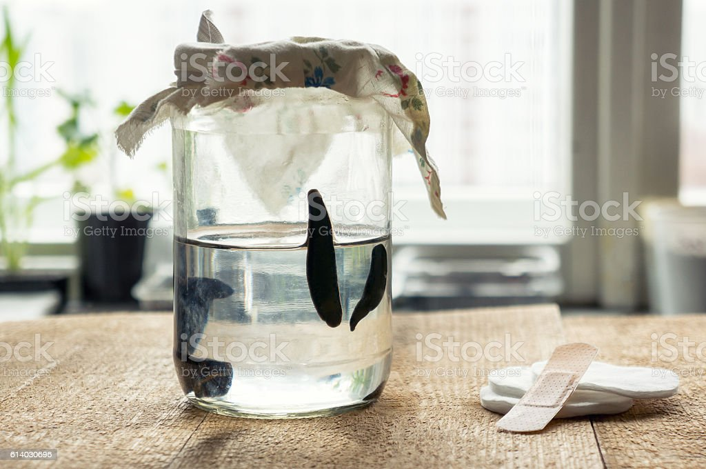 Medical leeches in a glass bottle stock photo