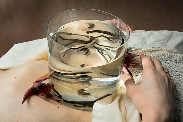 medical leeches stock photo