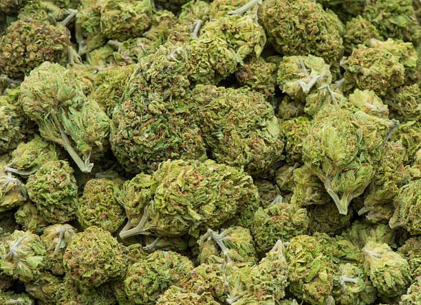 medical marihuana, suszone i gotowy do użycia - pączek etap rozwoju rośliny zdjęcia i obrazy z banku zdjęć