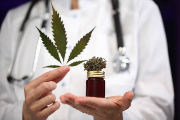 medical marijuana in the hand of a doctor. cannabis alternative medicine stock photo
