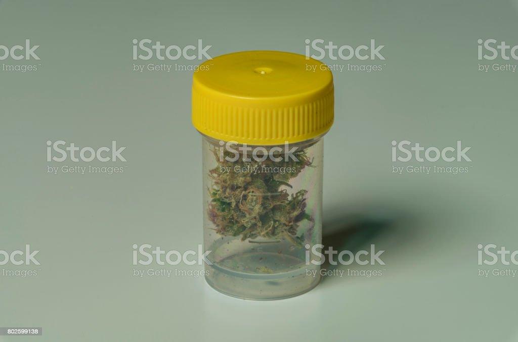 Medical marijuana in transparent plastic box stock photo
