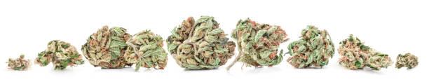 medizinisches marihuana isoliert auf weißem hintergrund. therapeutisches und medizinisches cannabis - blütenstand stock-fotos und bilder
