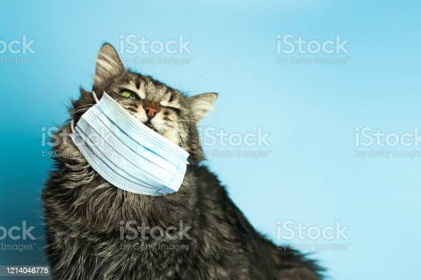 Medical mask for cat virus protected cat at home picture id1214046775?b=1&k=6&m=1214046775&s=612x612&h=x0iovls6pzbirpduf8tcsf44ypeogkfv5e3wllvtjuy=