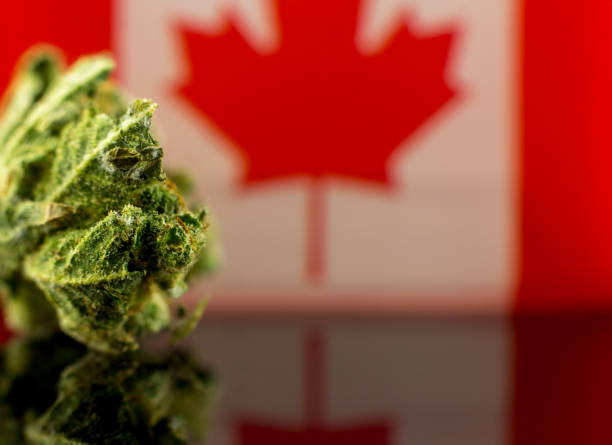 Medical Oil Cannabis - marijuana oil, resin and flowers with Canada flag on the mirror black background. Cannabis resin and flowers with Canada flag on the mirror black background. canada flag photos stock pictures, royalty-free photos & images