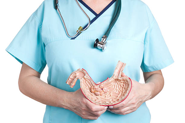 a medical professional holding an example of stomach cancer - esophagus stock photos and pictures
