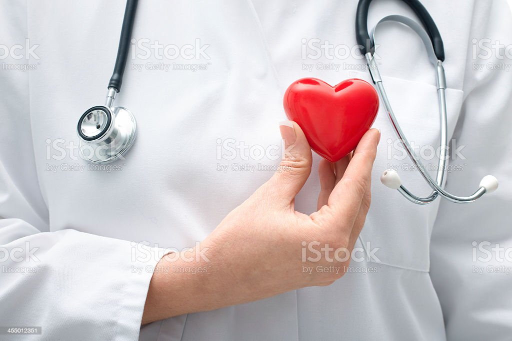 Medical professional holding small red heart anatomically stock photo