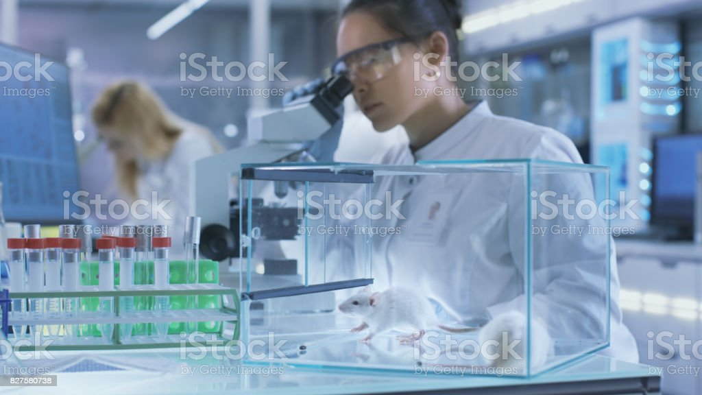 Medical Research Scientist Examines Laboratory Mice and Looks on Tissue Samples under Microscope. She Works in a Light Laboratory. stock photo
