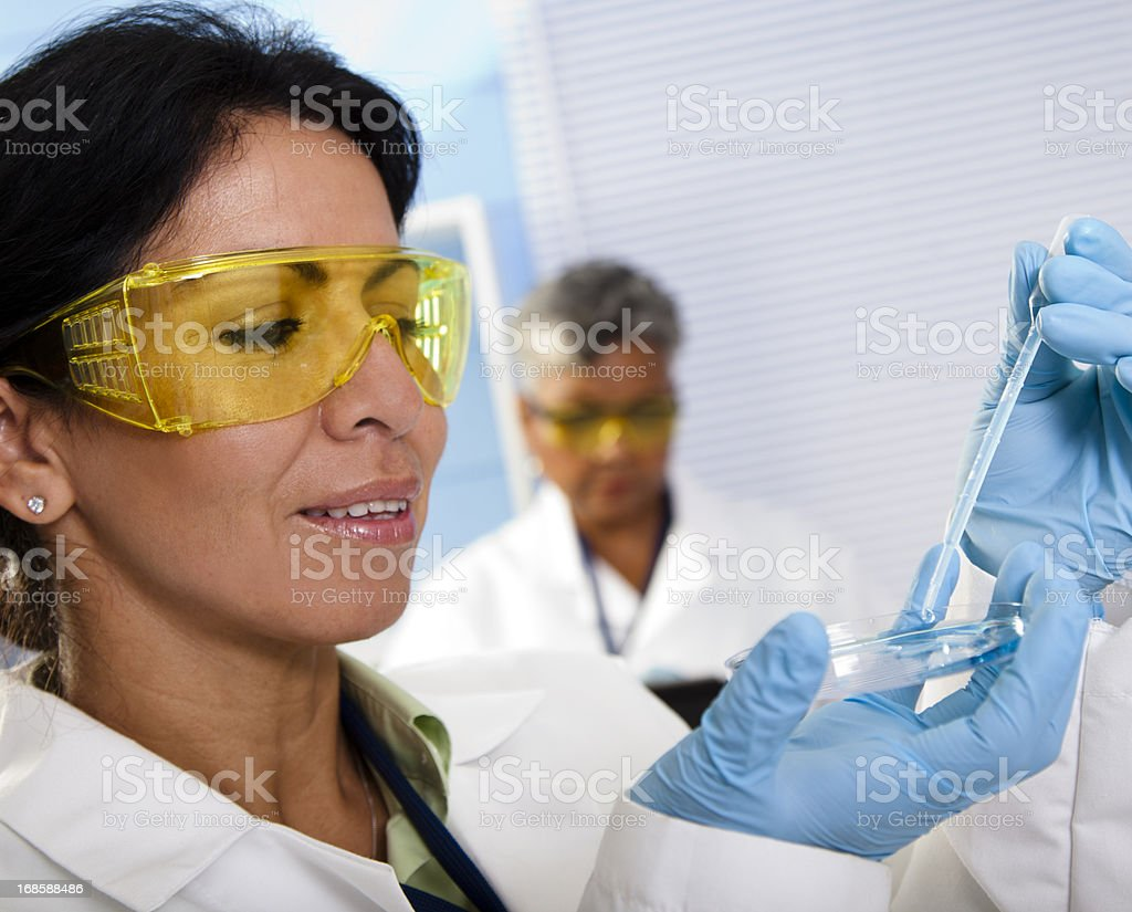 Medical: Science laboratory technicians, scientists conduct research. Petri dish. royalty-free stock photo