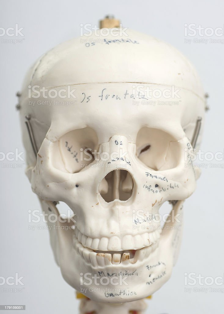 medical skull potrait royalty-free stock photo