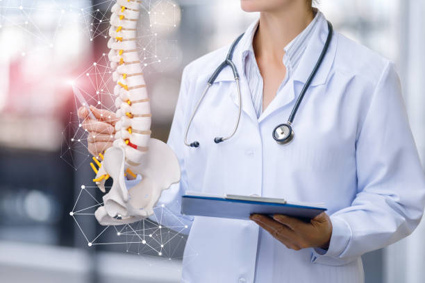 A medical worker shows the spine . stock photo