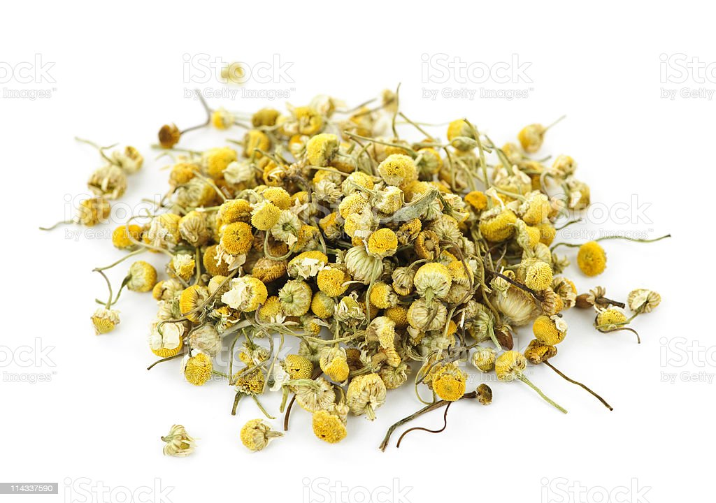 Medicinal chamomile herbs stock photo