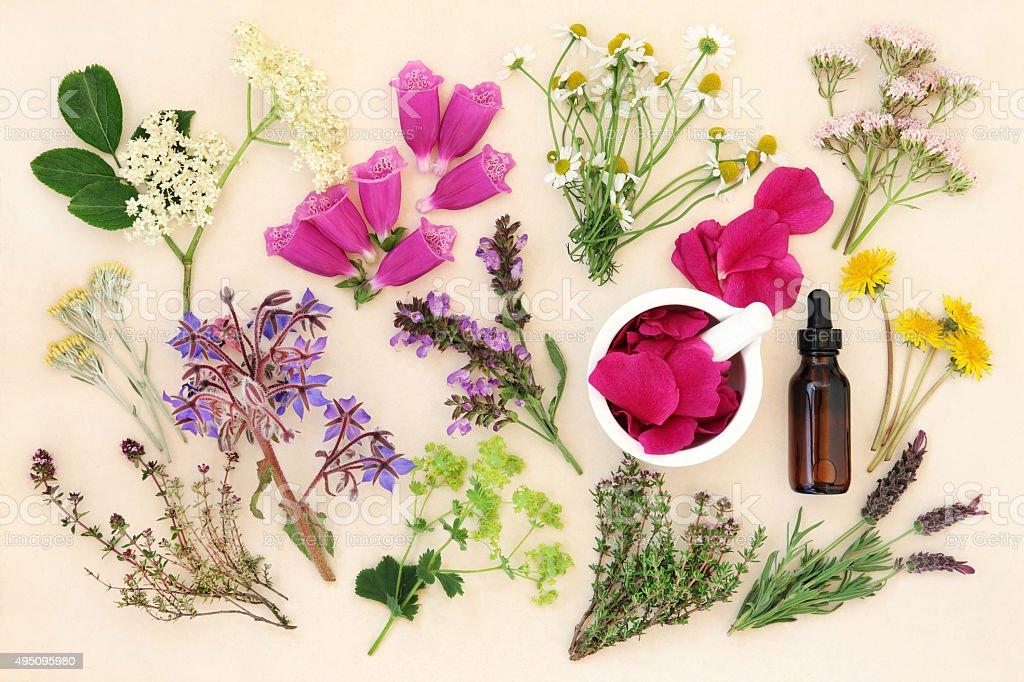 Medizinische Blumen und Kräuter – Foto