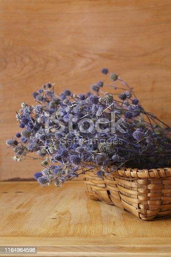Medicinal herbs - blue thistles, blue eryngo, flat sea holly, Eryngium planum
