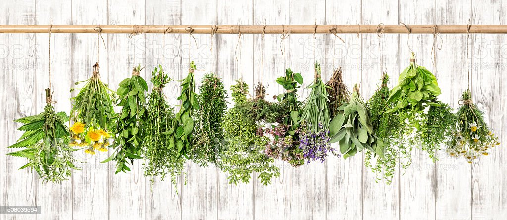 Medicinal herbs. Herbal apothecary. Lavender, dandelion, nettle stock photo