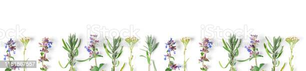 Medicinal herbs lavender catnip yarrow on a white background picture id1181867557?b=1&k=6&m=1181867557&s=612x612&h=djt8rnlunz gajjdqotzaxkvpztwqfwl5 1ohg4zpt8=