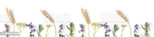 Medicinal herbs lavender catnip yarrow on a white background picture id1181867626?b=1&k=6&m=1181867626&s=612x612&h=jib5bmwgijdacnueqiyr41 n2 xxbphz29q2tun7tiw=