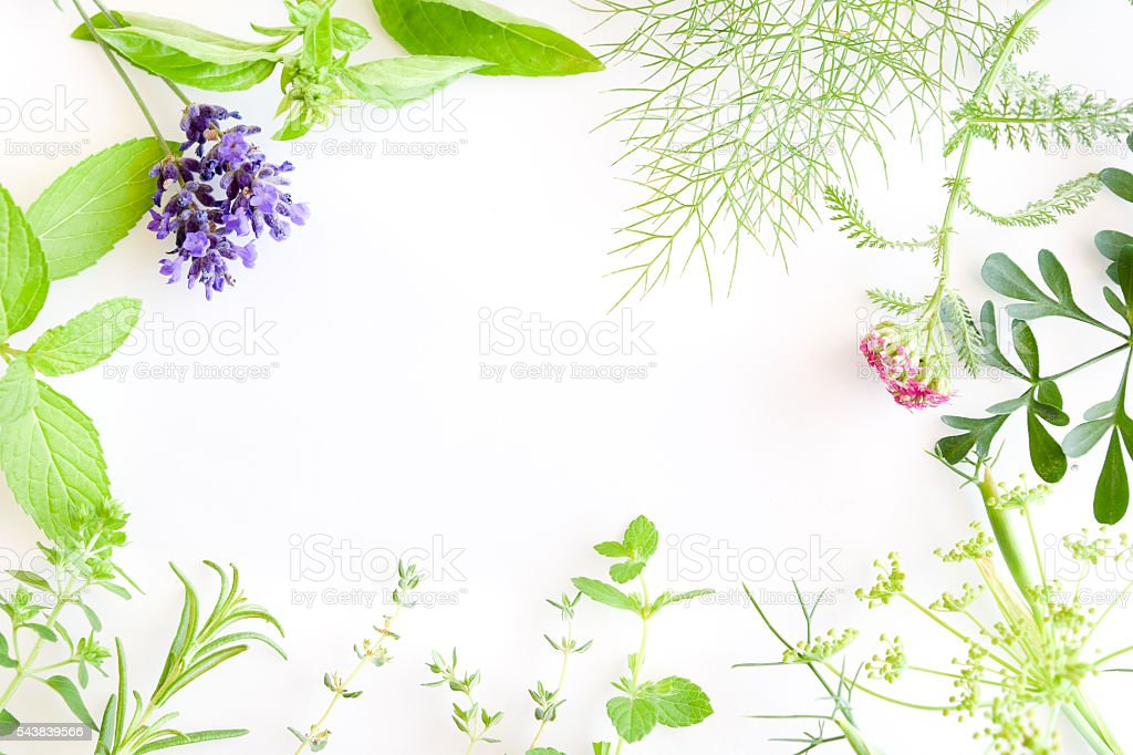 Medicinal Herbs On W