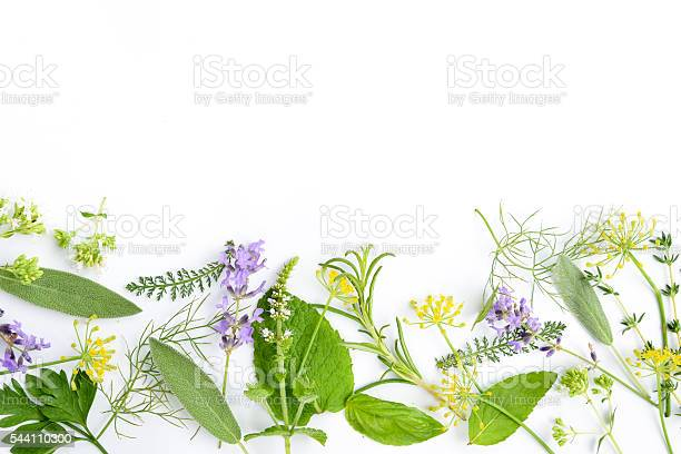 Medicinal herbs on white background picture id544110300?b=1&k=6&m=544110300&s=612x612&h= m5z bbcvg0uswk7adwrl1fajqamaezps2kv06i0ism=
