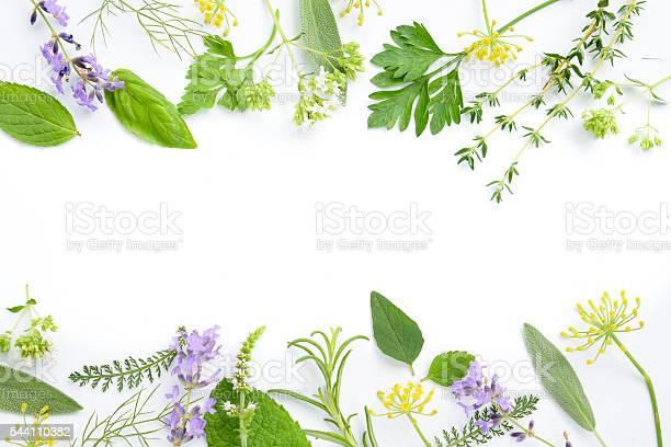 Medicinal herbs on white background picture id544110382?b=1&k=6&m=544110382&s=612x612&h=7shux1t9 4nm gfx8icpbfsg hytjx5ch6phxo7puok=