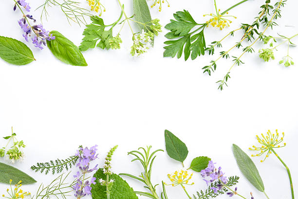medicinal herbs on white background frame of medicinal herbal leaves and flowers on white background herbal medicine stock pictures, royalty-free photos & images