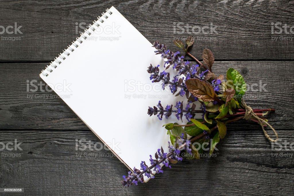 Medicinal plant Ajuga reptans and notebook stock photo