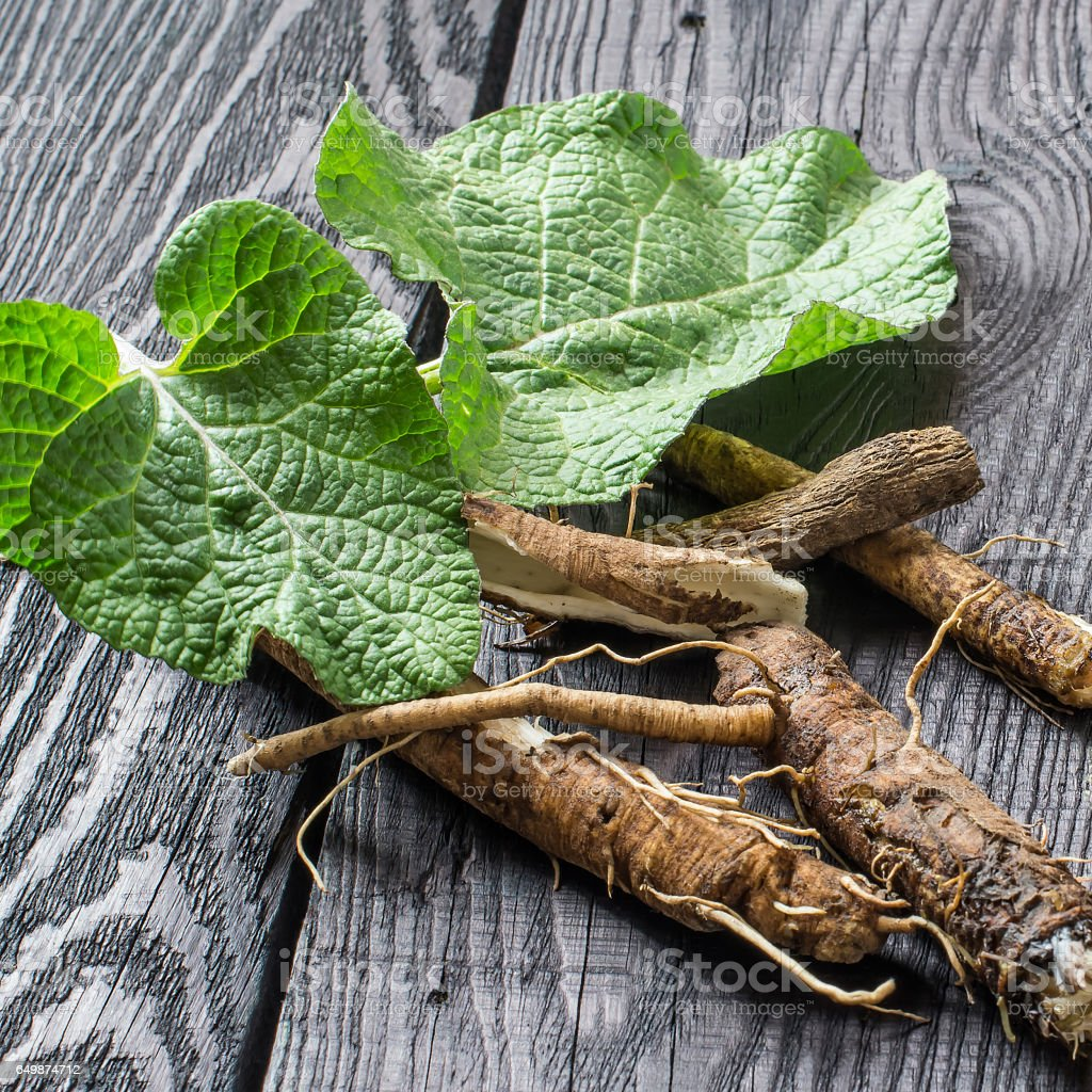 Medicinal plant burdock (Arctium lappa) on a dark wooden background - foto stock