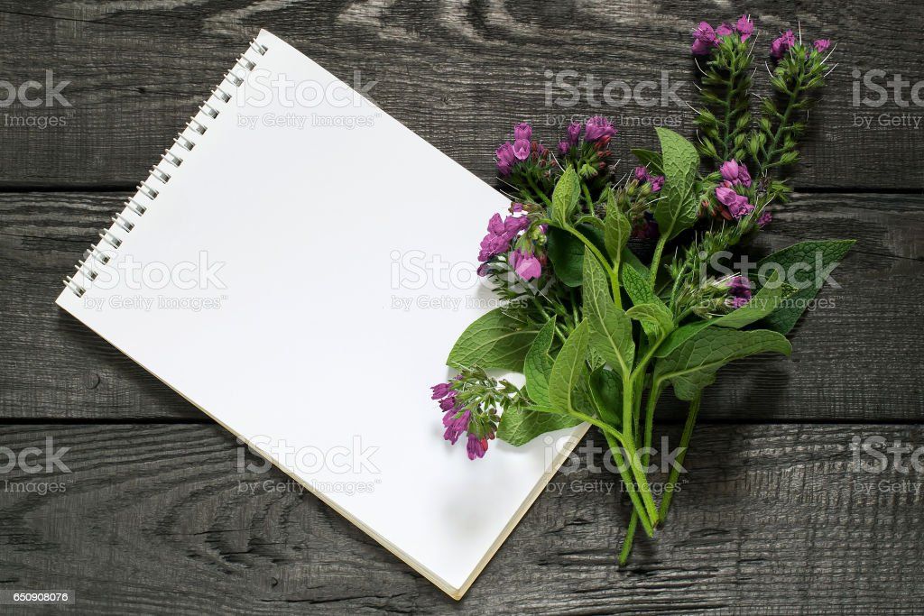 Medicinal plant comfrey (Symphytum officinale) and notebook stock photo