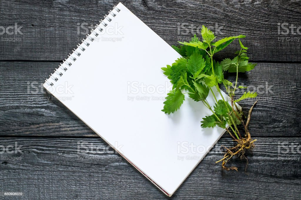 Medicinal plant nettle (Urtica dioica) and notebook Medicinal plant nettle (Urtica dioica) and notebook to write recipes and methods of application. It is used in herbal medicine, food preparation and production of fabrics Alternative Medicine Stock Photo