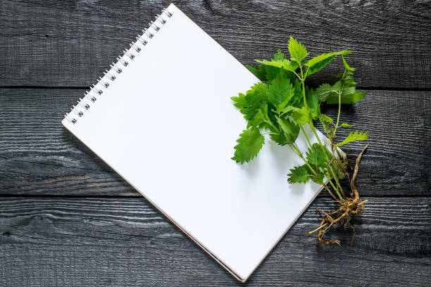 Medicinal plant nettle (Urtica dioica) and notebook Medicinal plant nettle (Urtica dioica) and notebook to write recipes and methods of application. It is used in herbal medicine, food preparation and production of fabrics antifebrile stock pictures, royalty-free photos & images