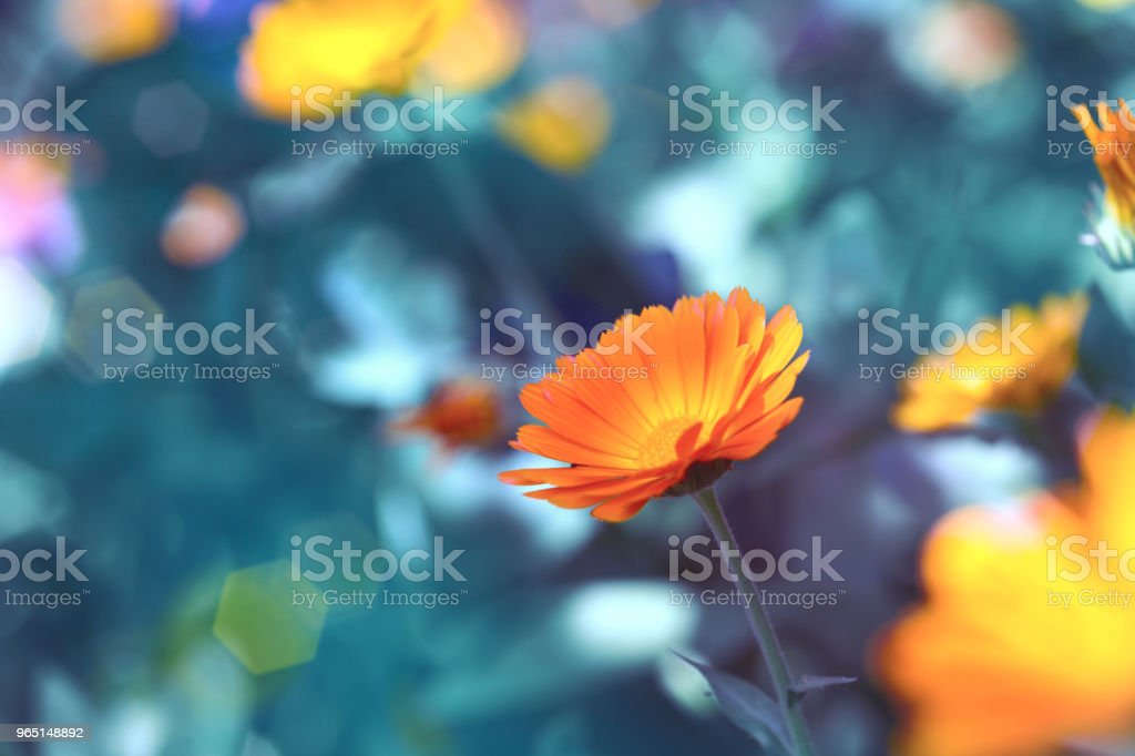 medicinal plant royalty-free stock photo