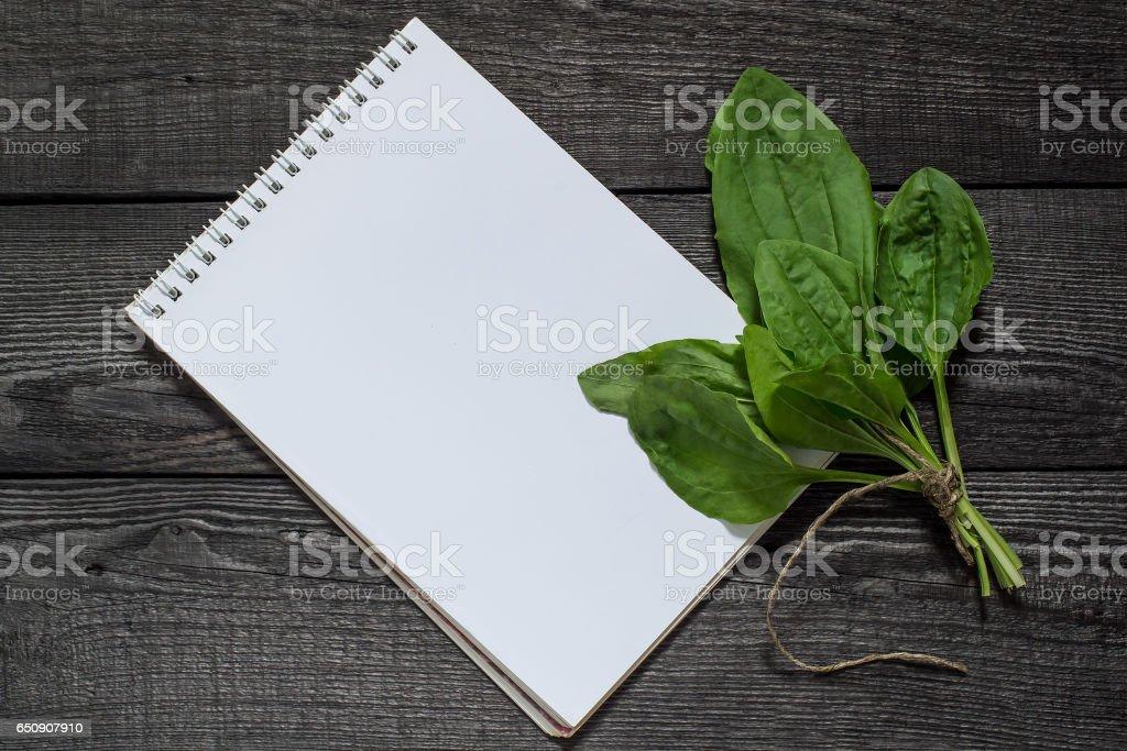 Medicinal plant  plantain (Plantago major) and notebook stock photo