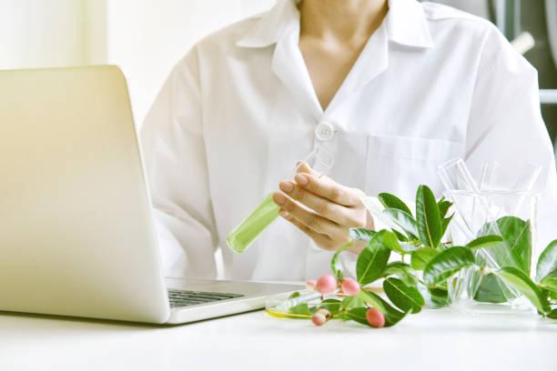 Heilpflanzenforschung, Wissenschaftler, der organisches Kräuterheilmittel für neue Arzneimittel, Gesundheitswesen und Entwicklungskonzept studiert. – Foto