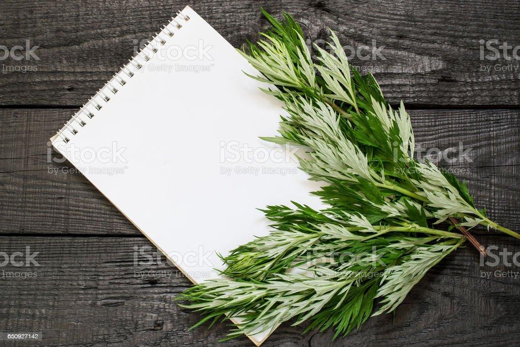 Medicinal plant wormwood (Artemisia absinthium) and notebook stock photo