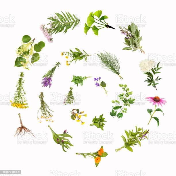 Medicinal plants snail spiral picture id1002710992?b=1&k=6&m=1002710992&s=612x612&h=7shlswlmkw4thkpnxb03ee l50 dv6nkmsuo23owfh4=