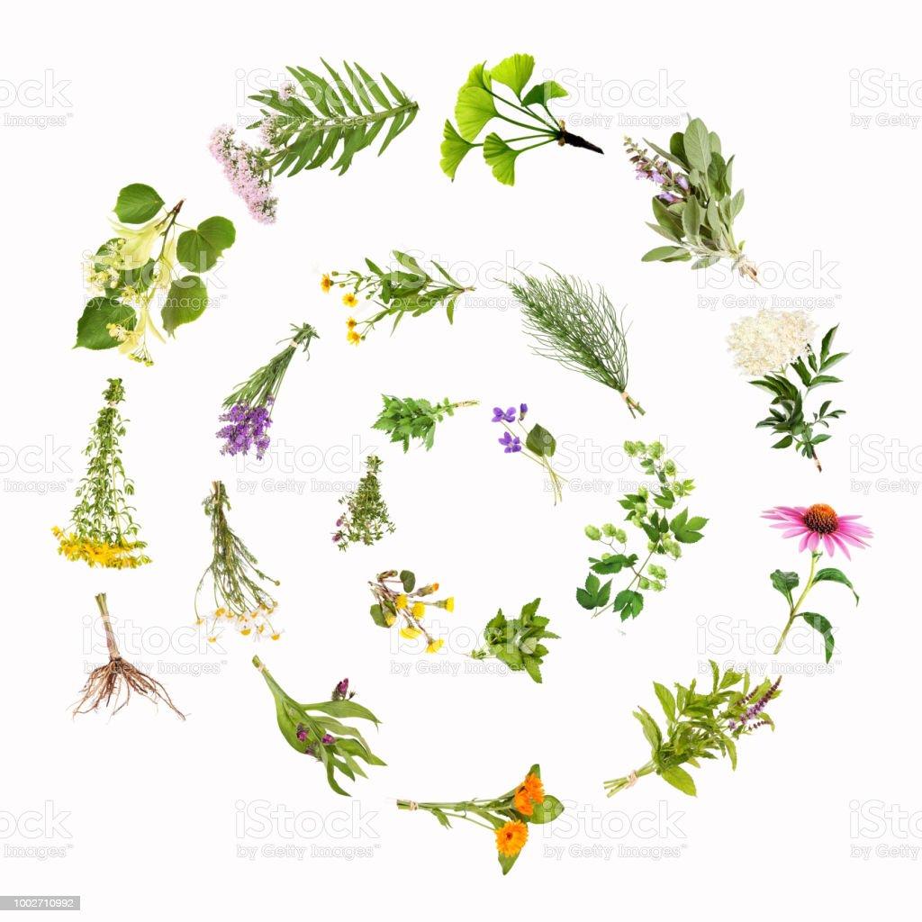 Medicinal plants snail, spiral stock photo