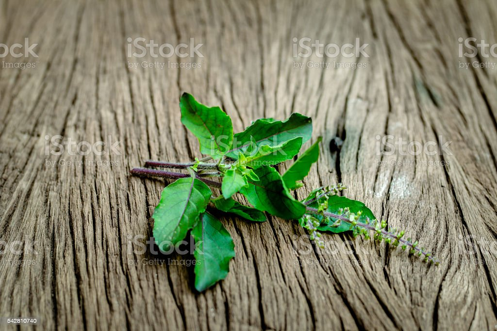 Medicinal red tulsi leaves on wooden surface stock photo