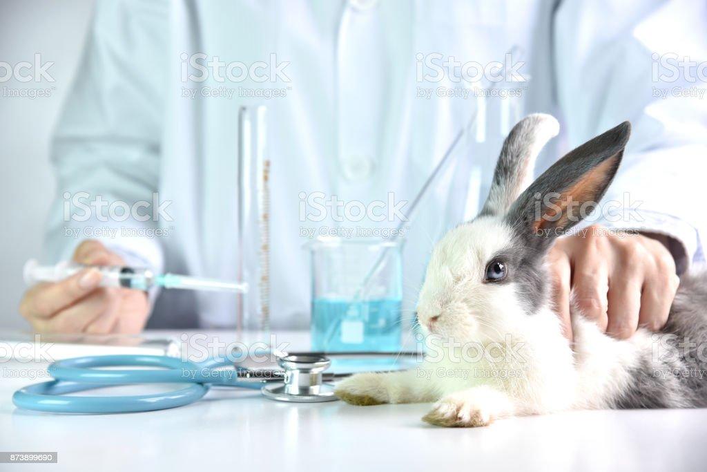 Medizin und Impfstoff-Forschung, Wissenschaftler testen Medikament in Kaninchen Tier, Droge-Forschung und Entwicklung-Konzept. – Foto