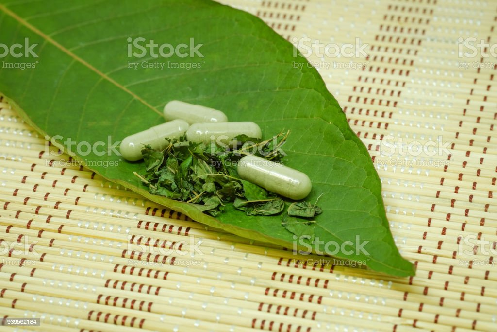 medicine capsule, drug and Mitragyna speciosa leaf (kratom) and Shred, Kratom is Thai herbal which encourage health on mat stock photo