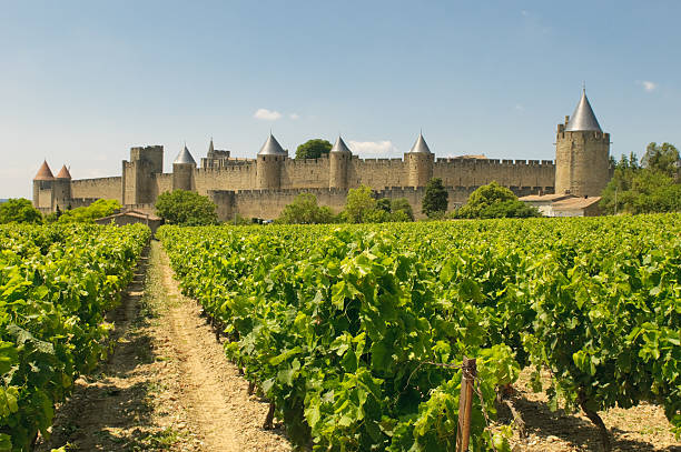 Medieval town of Carcassonne surrounded by vineyards stock photo
