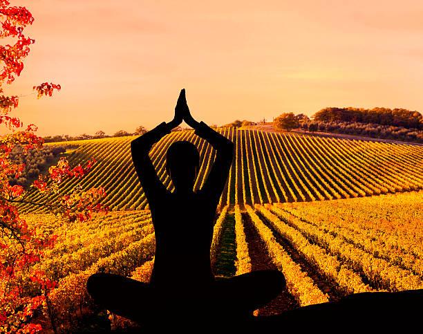 Meditation in the vineyard stock photo